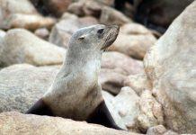 seals found dead